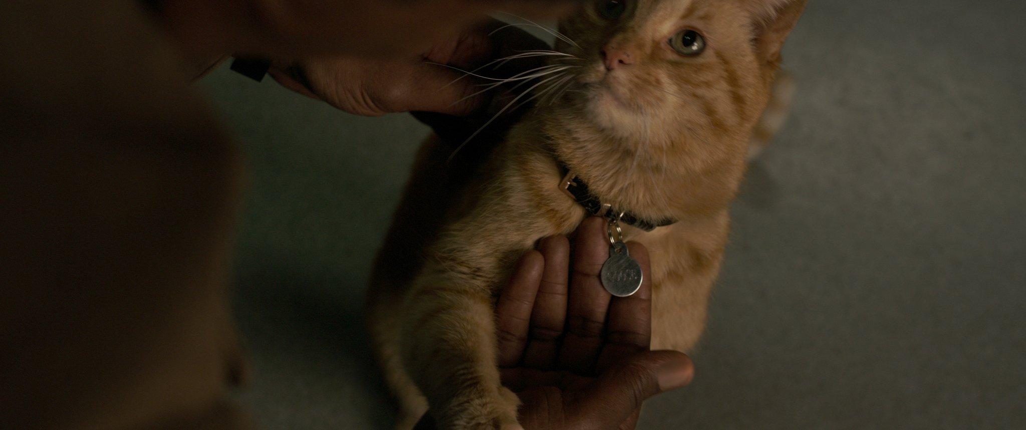 Гус кадр из фильма Капитан Марвел 2019